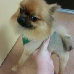 dog house phone number teddy s dog house 13 photos 10 reviews pet groomers 3906 w ina rd marana
