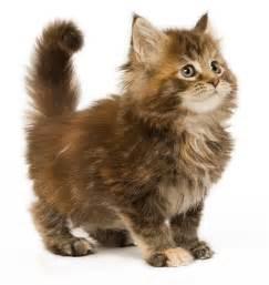 alimentation chat d int 233 rieur royal canin croquettes et