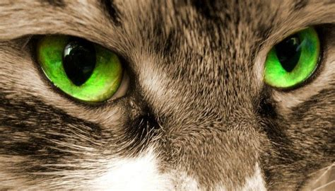 Light Ideas by Why Do Cats Eyes Glow