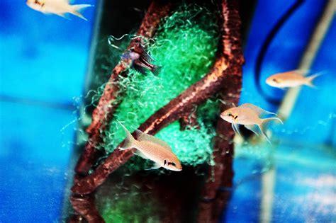 Aquarium D Eau Chaude by Poissons Eau Chaude 224 Mons Belgique Arowana Poissons