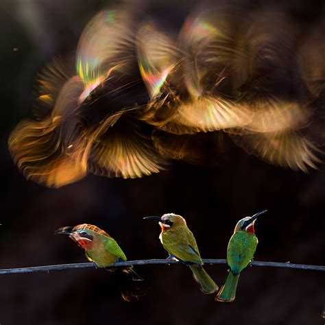 nat geo photo contest 2016 winners the best of the best selecting the 2015 national