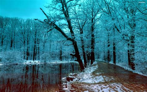 wallpaper blue forest beautiful blue winter forest in the evening walldevil