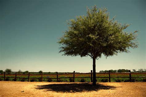 tree photography 35 fantastic photos of trees