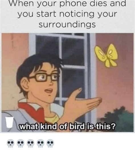 when your dies 25 best memes about what of bird is this what of bird is this memes