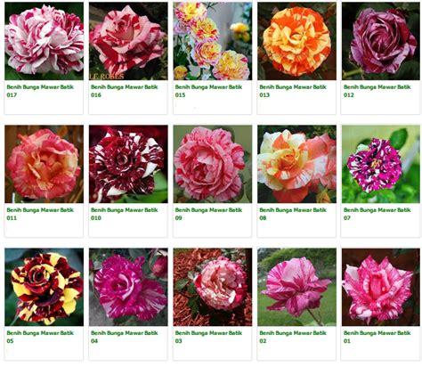 Benih Biji Bunga Penstemon Biru jual biji mawar 085875578608 mawar hitam mawar ungu
