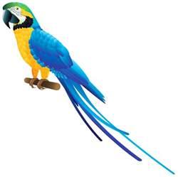Lighting Shoes Blue Parrot Png Clipart Best Web Clipart
