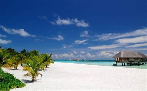 nature landscape beach maldives palm trees sand