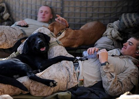 The Dogs Of War photos dogs of war canine surge