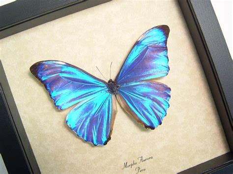 blue butterfly tattoo meaning 1000 ideas about blue butterfly on