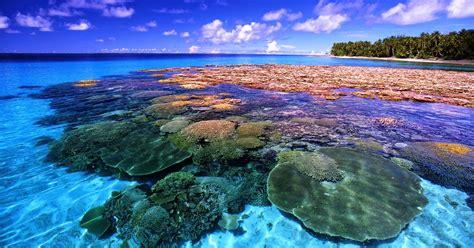 themeforest indonesia kerusakan terumbu karang di indonesia gomumu
