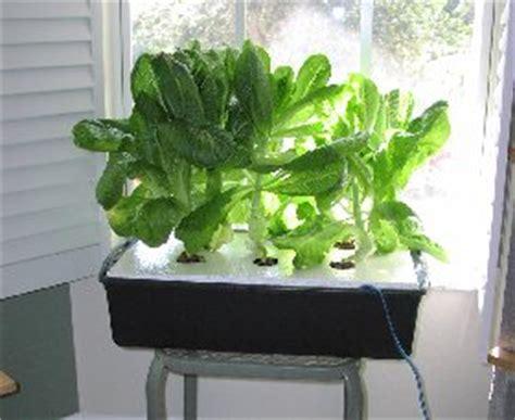 lettuce raft  plans