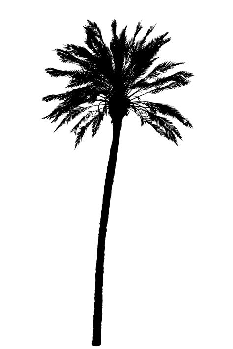 silhouette  palm trees realistic vector illustration
