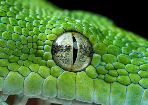 Kaos 3d Snake Eye snake eye closeup by henrik vind on 500px photography macro snake snake