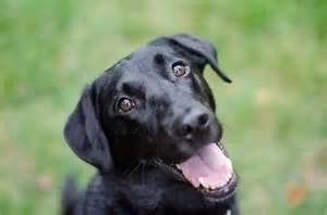 Es Cur Remedios Caseros Para Dar Brillo Al Pelo De Mi Perro