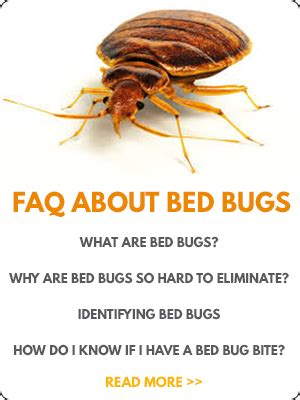 will heat kill bed bugs bed bug pest control heat bed bugs