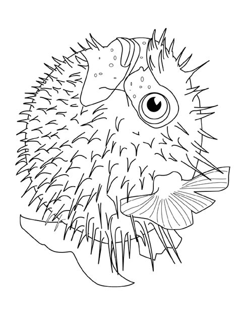 coloring pages puffer fish fish coloring pages coloringpages1001 com