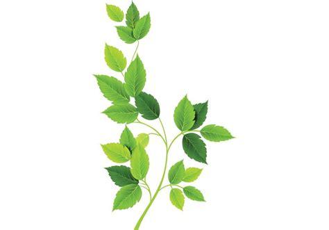 imagenes hojas verdes verde hojas vectores descargue gr 225 ficos y vectores gratis