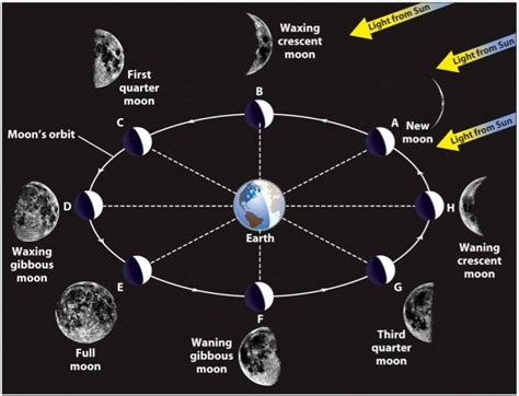 phases of moon diagram image gallery lunar phases diagram