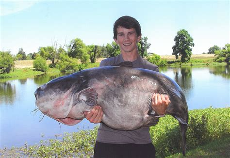 Carolina Records Catfish Blues Rule Threatens Species Coastal Review