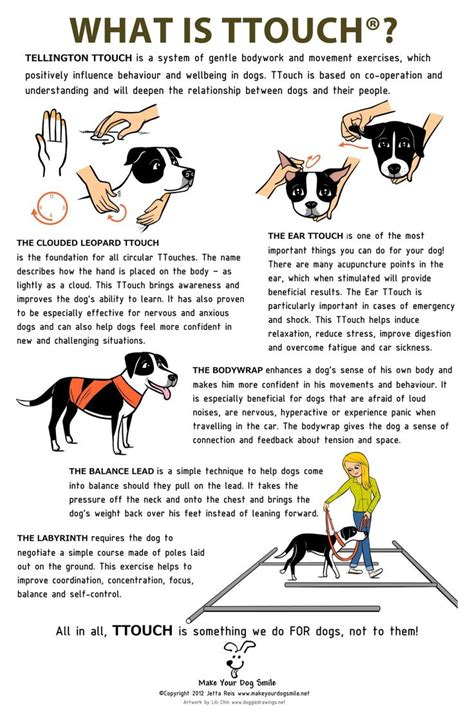 ttouch for dogs 1000 ideas about agility on dogs
