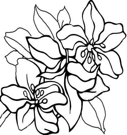 coloring pages of mexican flowers coloring pages printables flowers shoaib bilal flowers