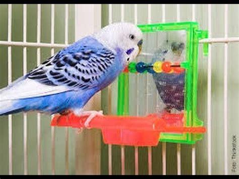 accessori per gabbie pappagalli accessori giusti per i vostri pappagalli e non