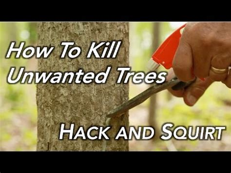 how to kill a bush how to kill a tree hack and