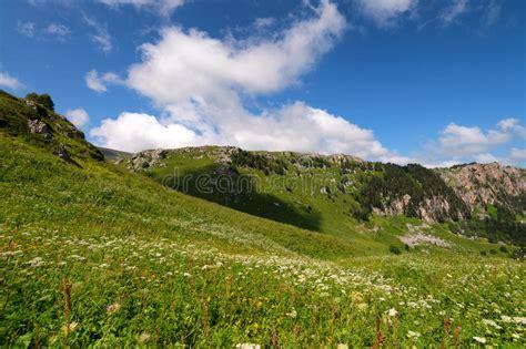 fiori russia fiori della montagna fotografia stock immagine di russia