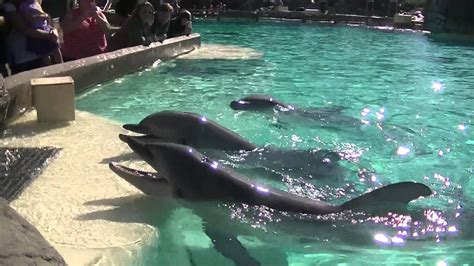 dolphin point    nov   pm seaworld san