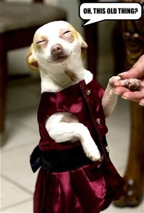 Get All Dressed Up by When You Get All Dressed Up And Are Complimented On How