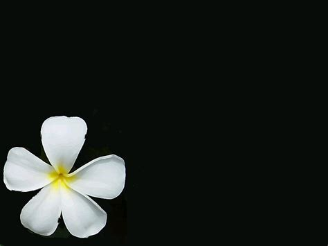 wallpaper flower simple free wallpaper downloads simple wallpaper but with style