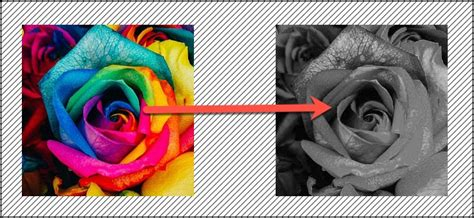 color to black and white how to change a picture to black and white in microsoft word