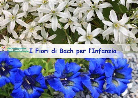 fiori di bach per neonati i fiori di bach per l infanzia naturopataonline