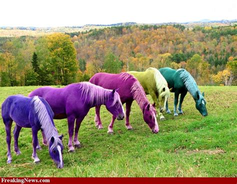 colorful horses at home with elaine of a different color