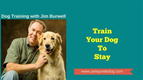 how to your puppy to stay your to stay jim burwell s petiquette