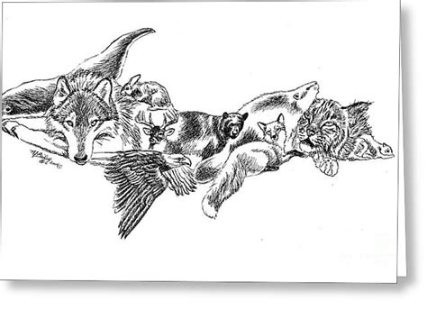 J Harold Bailey Sketches by Michigan U P Wildlife Drawing By Nancy J Bailey