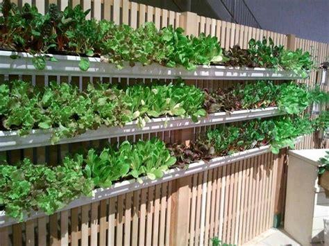 Gutter Vegetable Garden Gutter Gardening On Fence Gardening