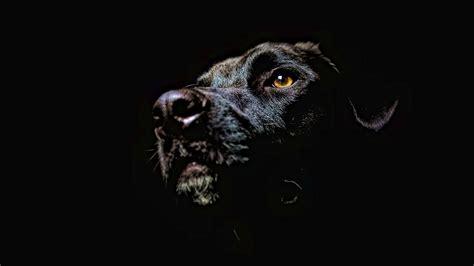 free desktop wallpapers backgrounds dog wallpapers for dog desktop wallpapers free on latoro com