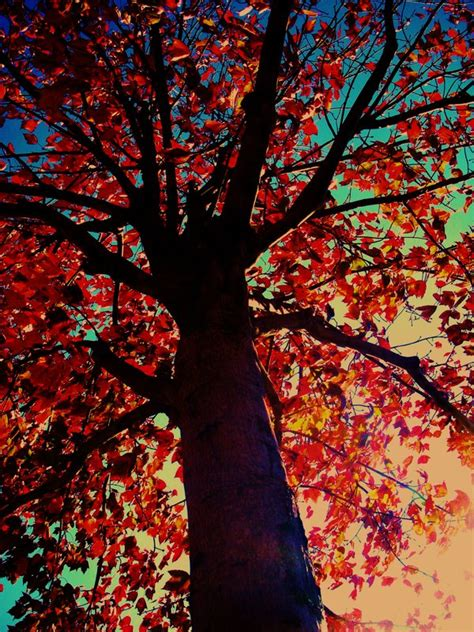 colorful trees colorful tree low angle by echan44 on deviantart