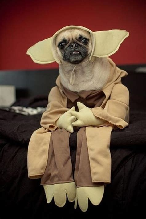 pug in a costume pug yoda costume wars