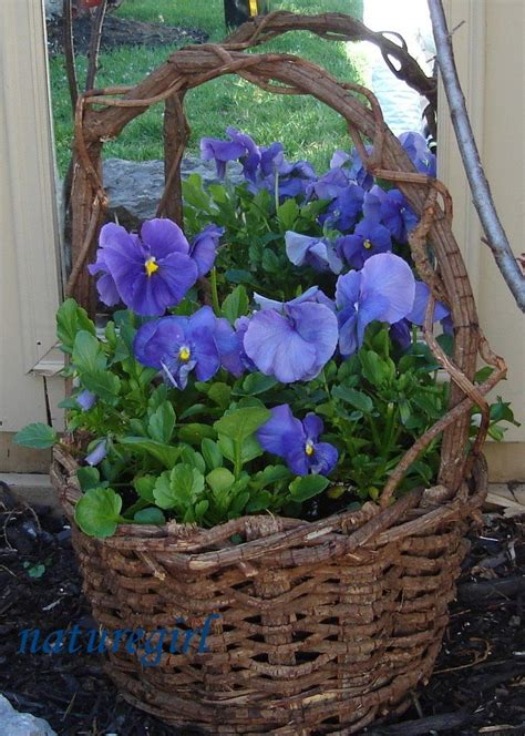 Early Spring Garden Ideas Pansies Photograph Pansies I Am Pansy Garden Ideas