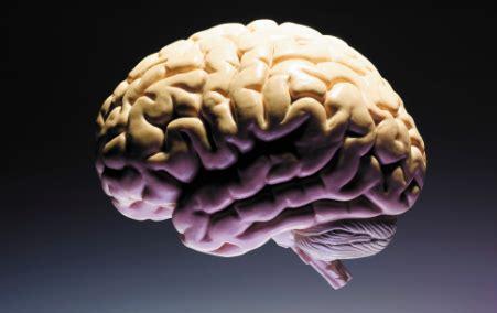 el cerebro obeso las 10 cosas que no sab 237 as sobre el cerebro