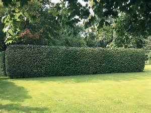stanton tree care and gardening services