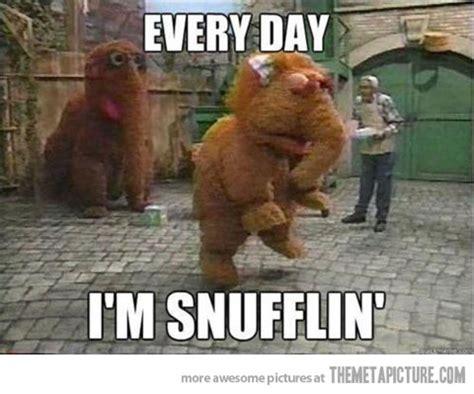 Funny Everyday Memes - ikbhal funny elephant