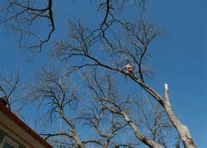 City Of Arborist Tree Contractors City Of Longmont Colorado