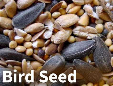 wild bird and wildlife jamestown feed and seed