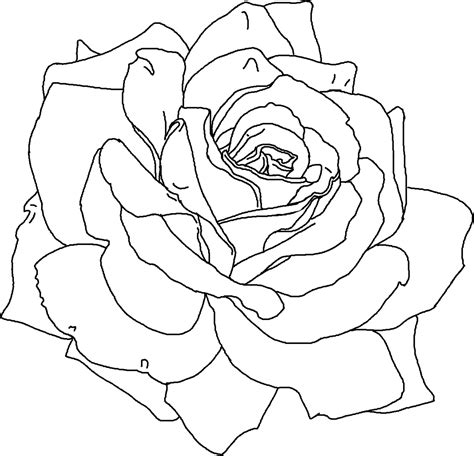 free printable coloring pages of a rose free printable flower coloring pages for kids best