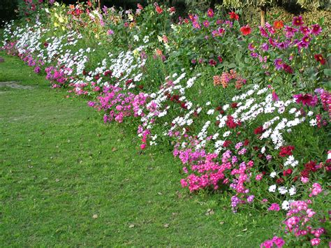 plant bed flower bed care tips flower pressflower press