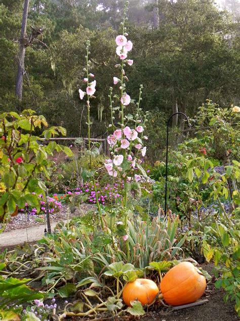 fall garden chores fall garden chores in a temperate climate 171 central coast