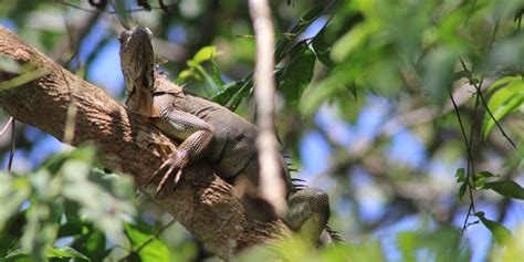 imagenes asombrosos de animales fotos de animales asombrosos